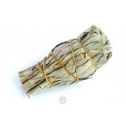 Biała szałwia Salvia Apiana...