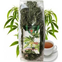Cannabis sativa Konopia...