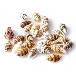 Muszelki małe Miniaturowe...